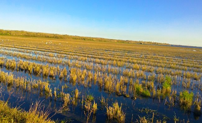 Agricultural excursion: the Rice of the Albufera's Natural Park